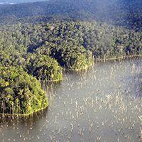 Activité Atmosphère d'Amazonie - Excursions en Forêt