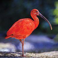 Activité Atmosphère d'Amazonie - Ibis Rouges